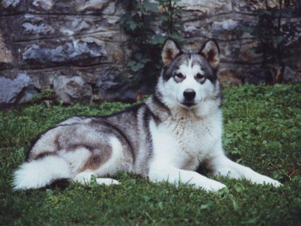 Hangacsfoi Viki 1994-2006